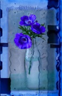 Flowers in Glass Vase by Lisa Powers