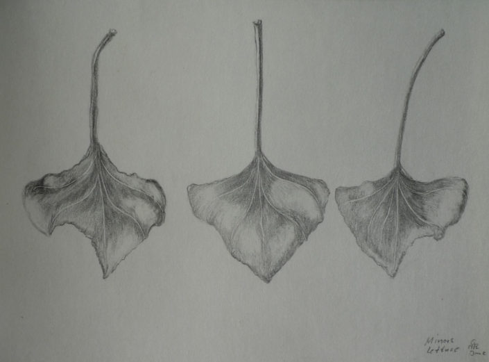 Minors Lettuce 3 by Gaby Reade