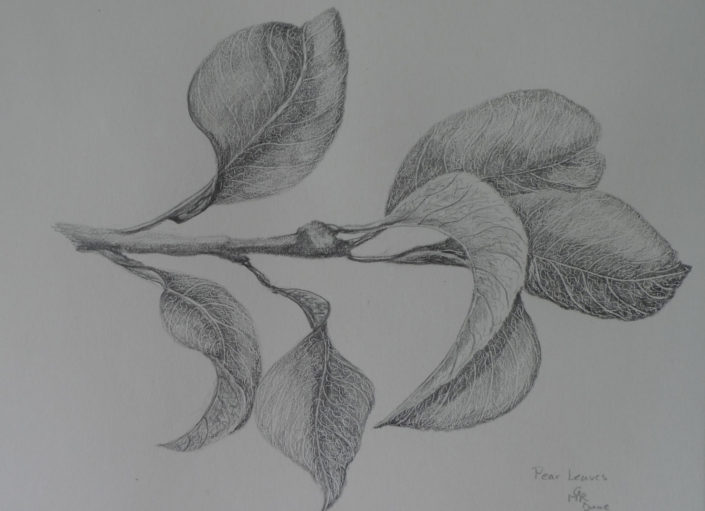 Pear Leaves 2 by Gaby Reade
