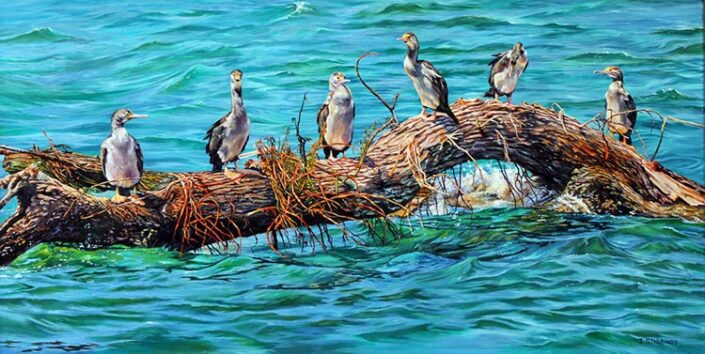 Shags on a Log by Jennifer Stebbings