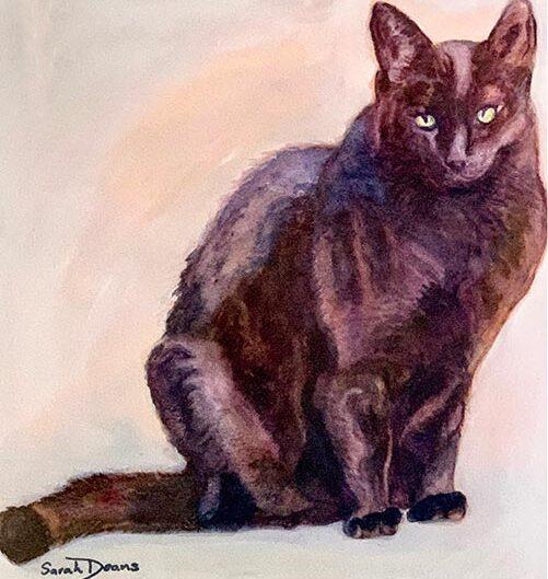 Jo's Cat, watercolour by Sarah Deans