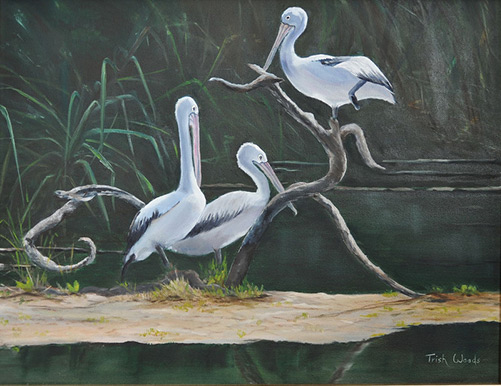 48 Pelicans at Berry Springs by Trish Woods