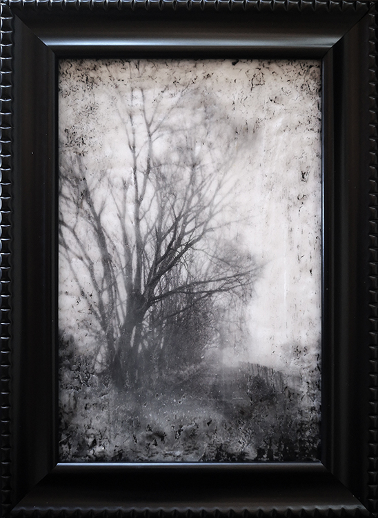 Tree Mist by Roseanne Jones