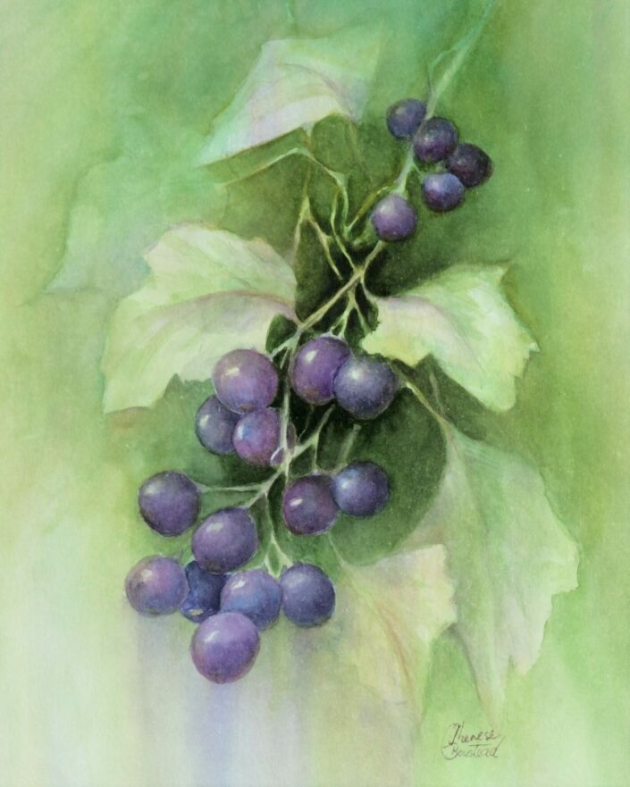 Grapes by Therese Boustead