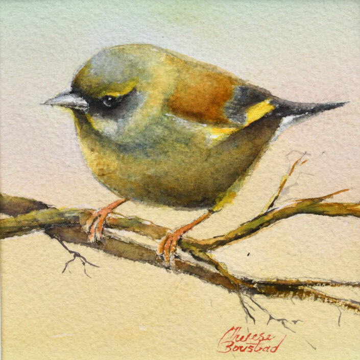 Greenfinch by Therese Boustead