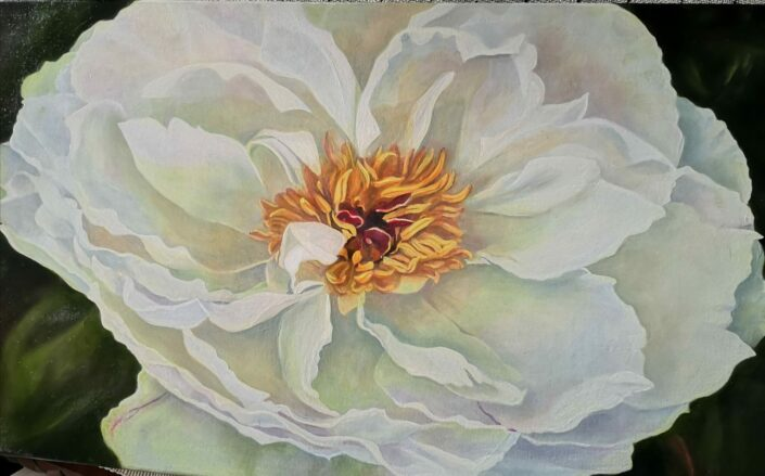 Peony by Mary Fraser