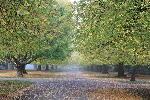 Autumn Ave of Trees Chch by Dave Shepherd