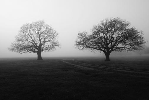 Hagley Park Winter Duo by Dave Shepherd