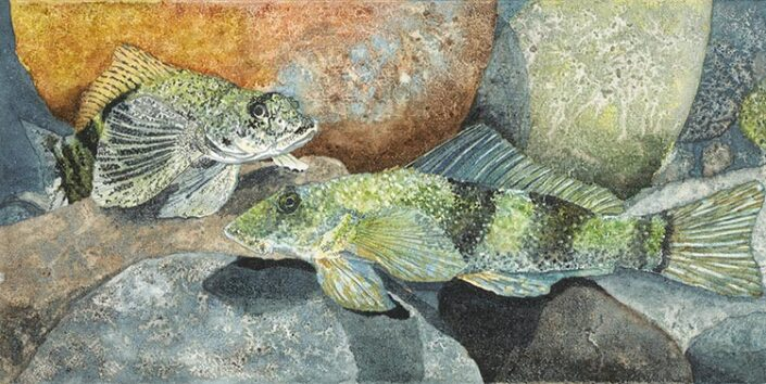 Torrent Fish by Betty Busby
