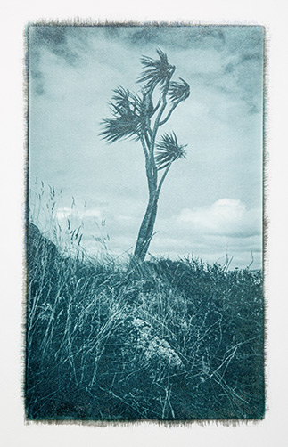 Cabbage Tree by Stuart Clook